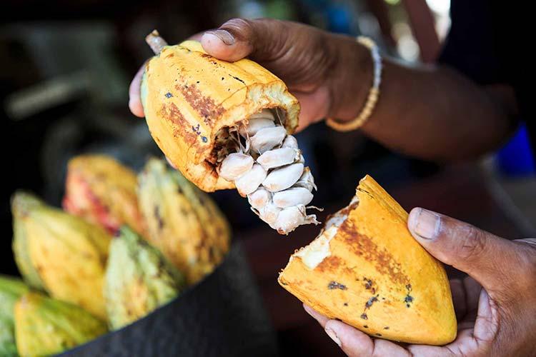 Kakao frukt